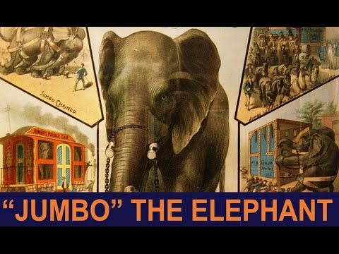 Jumbo was an Elephant Before it was a Word! | 1001 THINGS