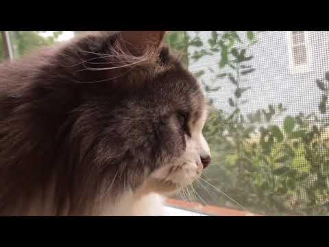 Indoor cat problems