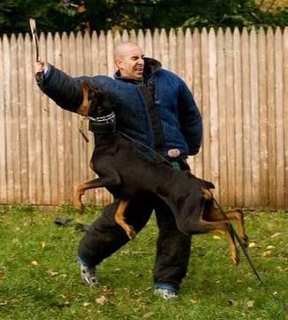 How to Train a Dog to Attack (K9-1.com)