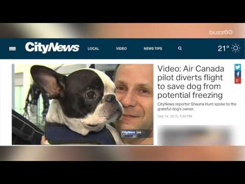 Pilot diverts flight to save a dog in cargo hold