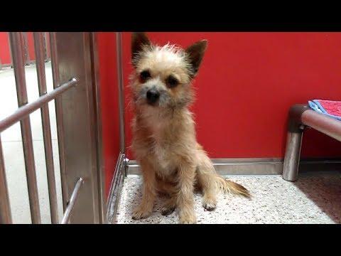 7 Pima Animal Care Center 1-12-18 Adoptable Doggies.