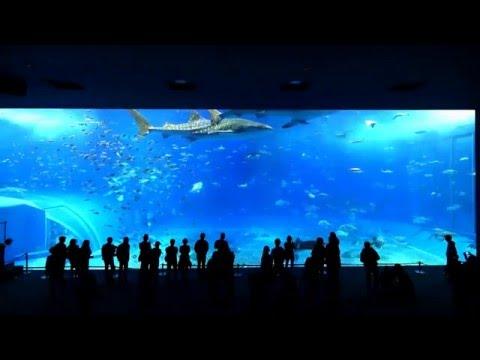【4K30p】沖縄美ら海水族館(01)-Okinawa Churaumi Aquarium Japan   The Kuroshio Sea(01)-