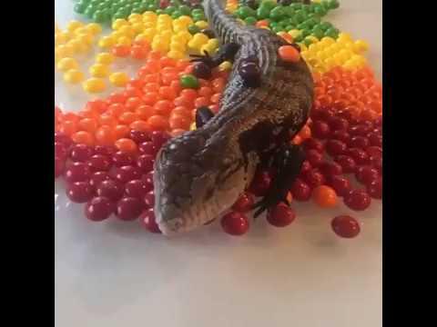 Skittles tastes the rainbow