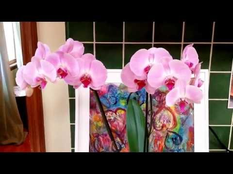 How to treat fungus on orchids.