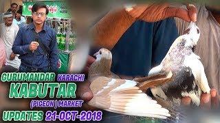 Pigeons Market in Pakistan - Guru Mandir Kabootar Market - PakVim