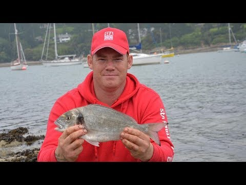 Fishing For Gilt head Bream with Sea Angling Adventures