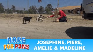 STOP DUMPING DOGS IN THE DESERT!!!  WTH is wrong with people???