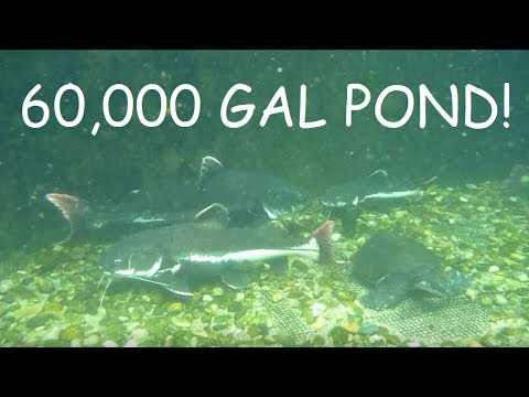60,000 GAL POND UNDERWATER UPDATE/FEEDING!
