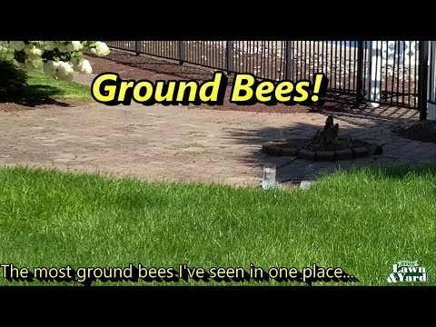 Lawn Care, Too many GROUND BEES!