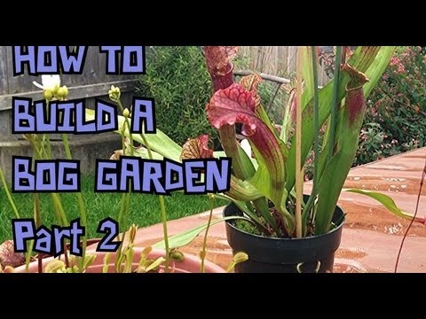 BOG VLOG 2 How To build a Temperate Carnivorous Bog Garden For North American Carnivorous Plants.