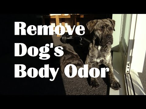 How to Remove Dog Odor. Help dog smell nice.