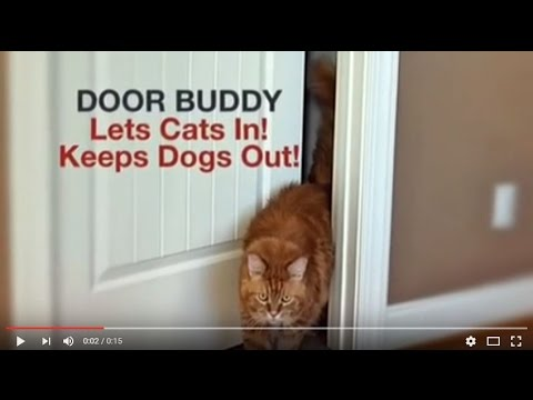 Why Do Dogs Eat Cat Poop? Door Buddy Holds Door Open For Cat to Keep Dog Out.