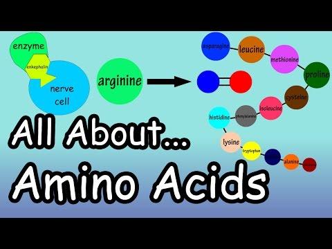 Amino Acids - What are Amino Acids - What Do Amino Acids Do