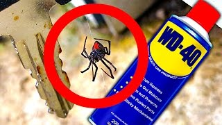 Download Deadly Spider Controls Testing WD40 Spider Method Video