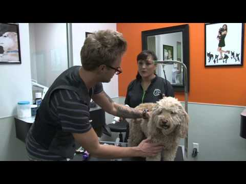 Grooming Video #4  Full Body & Paw Wipes and Waterless Foam Shampoo