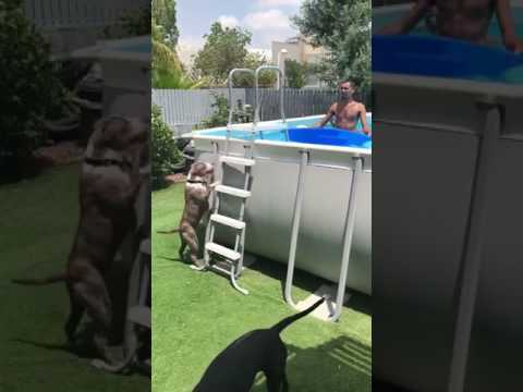 Dog and the pool