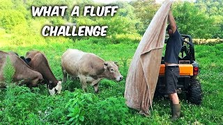 What the Fluff? - Magic Trick with My Pets