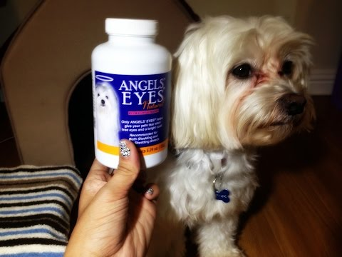 Dog Product Review - Angel Eyes Week 2 (For Tear Staining)