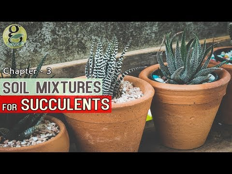 POTTING MIX FOR SUCCULENTS AND CACTI | DIY Soil Mixture for Succulents Indoor, Outdoor Universal Mix