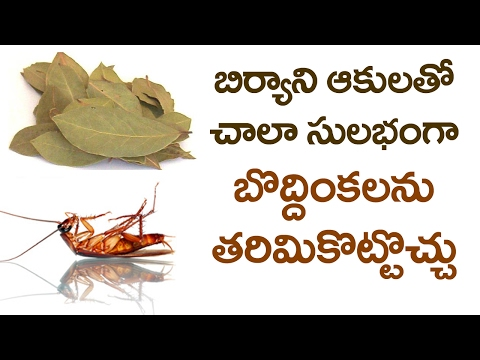 You Can Get RID OFF COCKROACHES at HOME with BAY LEAVES | Simple Home Remedies | VTube Telugu