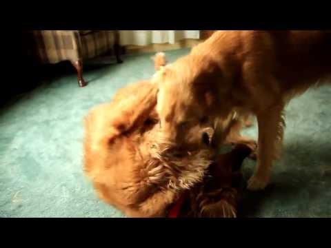 Huge Dog Fight