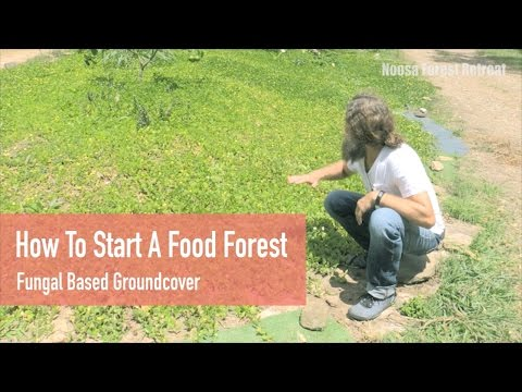 Free Permaculture Course Online Tips: How to start a Food Forest - Living Groundcover & Soil Builder