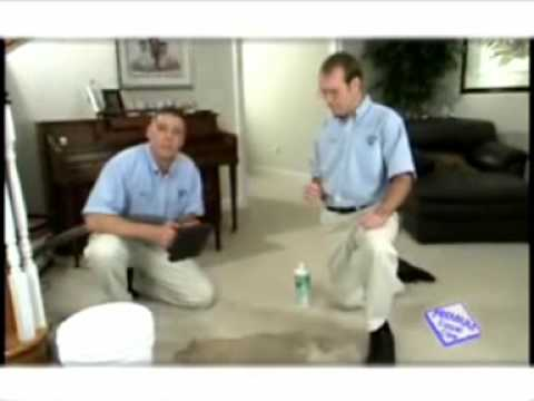 Carpet Cleaning Pensacola: Pet Stain Removal