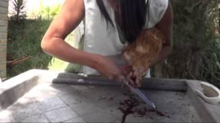china girl kill chiken - Pakfiles com
