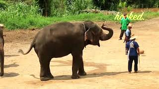 20 MOST WTF MOMENTS IN FOOTBALL