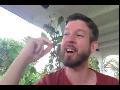 Rob Bob's Answer To My Aquaponics Video