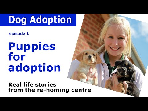 Puppies for adoption | Real life stories and advice from Dogs Trust | Episode 1