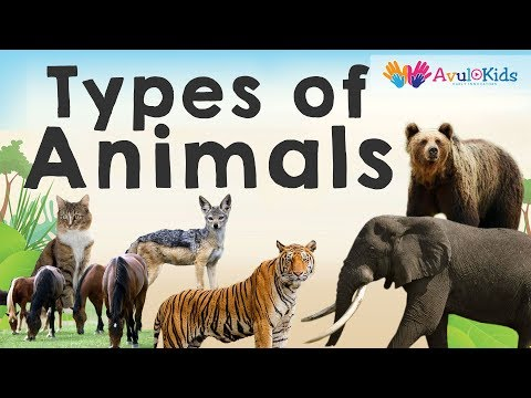 Types of Animals by eating habits|  Herbivores Carnivores Omnivores Scavengers