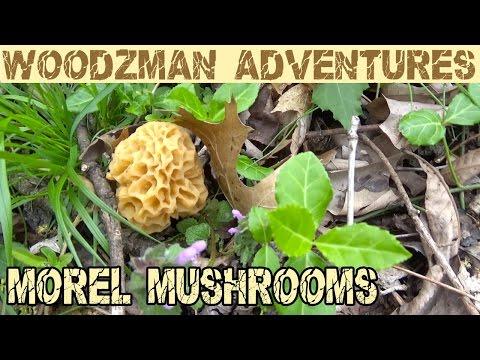Morel Mushroom Hunting in SW Missouri Ozark Mountains