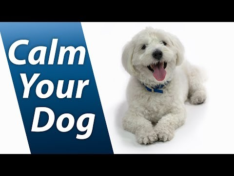 Calm Your Dog with White Noise | Relaxing Sound Soothes Puppy Anxiety Fast | 10 Hours