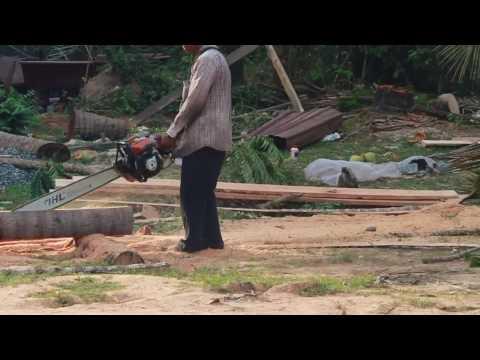 Cutting Coconut Tree in Cambodia