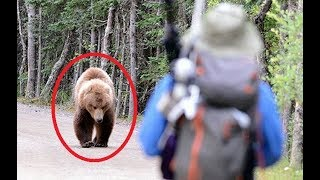 11 FEISTIEST Bears Ever