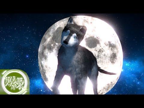 Dog (Blender 2.69)