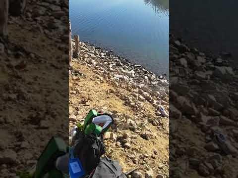 Red fin fishing nsw lake lyell