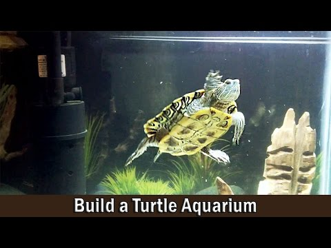 Turtle Aquarium Building and Setting Up Guide - DIY