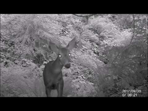 Elepawl Trail Camera (Game Camera)