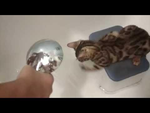 Котенок принимает душ
