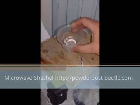 How to treat powder post beetles?  Drywood termites ?