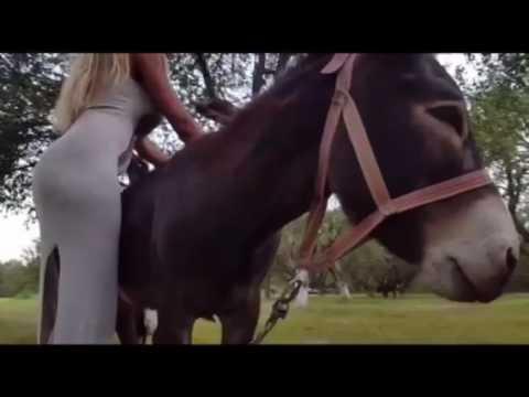 Xxx Mp4 Playing With Donkey 3gp Sex