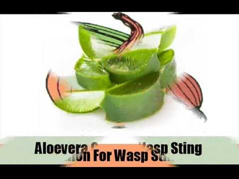 7 Home Remedies For Wasp Sting