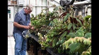 Ep 042: Private Begonia Tour - Plant One On Me