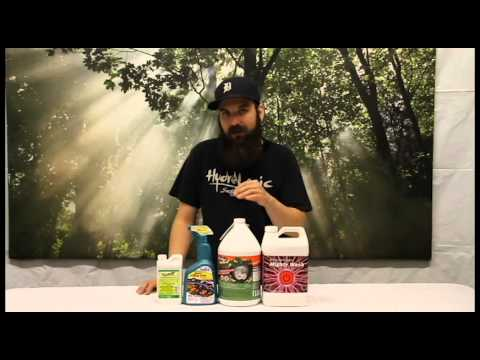 How to Kill Spider Mites in Your Garden