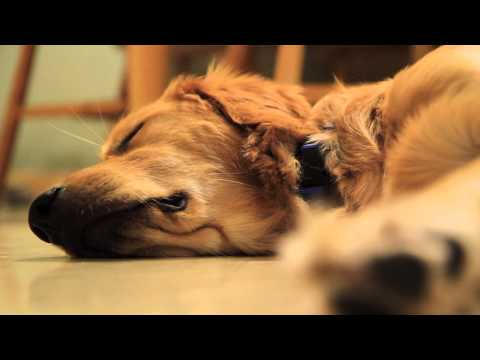 Tucker -- A Dog's Dream