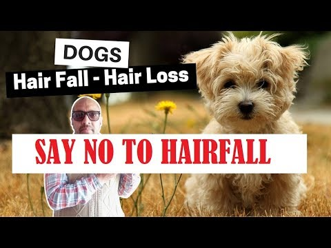 Basic ways to stop Hairfall in Dogs