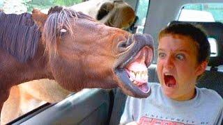 Es peligroso mirar 😂 Puedes morir de risa 2020 🐴🐏🌳 Animales ASUSTANDO a personas