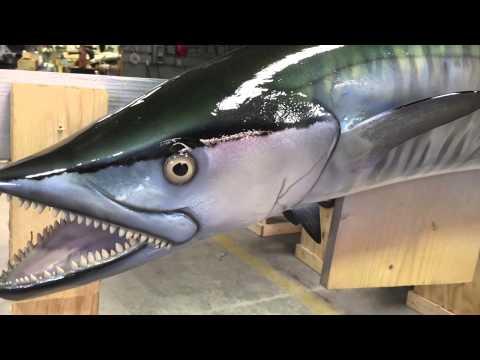 Kingfish   King Mackerel   Gray Taxidermy Fishmounts, Fish mounts